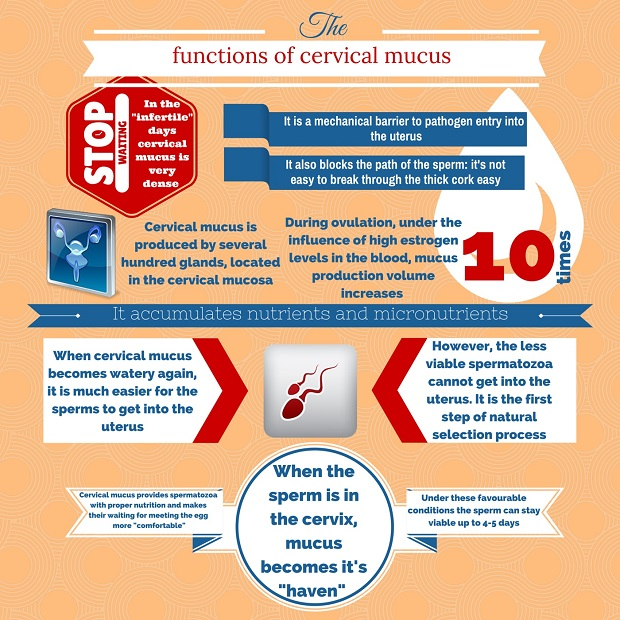 Changes in the Cervical Mucus After Implantation – All About